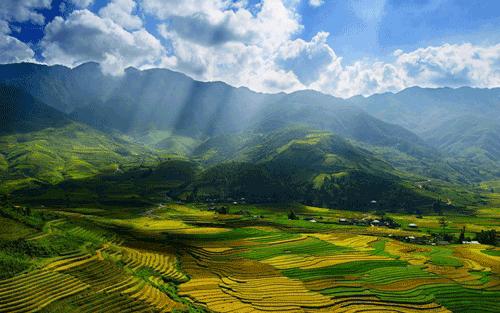 MÙ CĂNG CHẢI - MÙA LÚA CHÍN | TAXI PHÚC HÀ