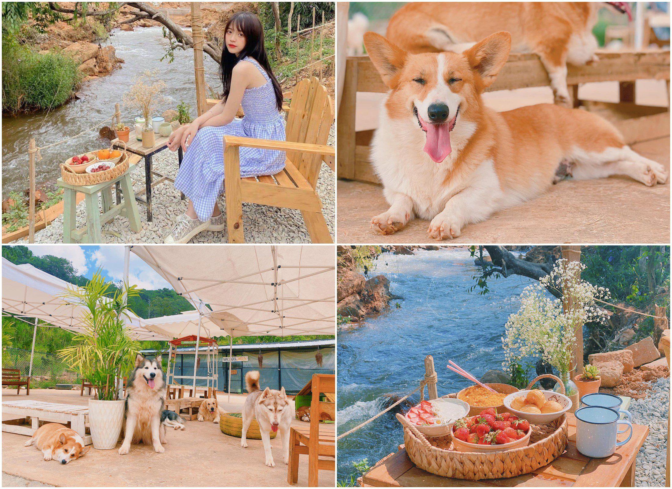 Nhà của Dog Garden